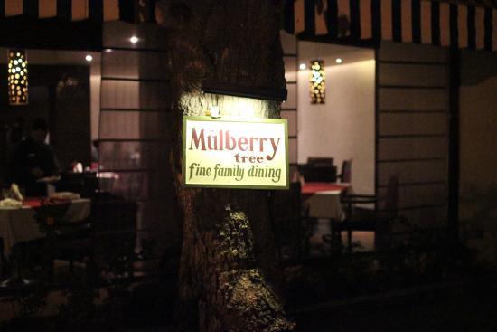 Best Restaurants in Mount Abu| Mulberry Tree